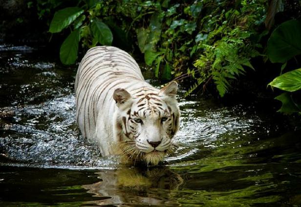 3D2N Singapore Itinerary - Singapore Zoo